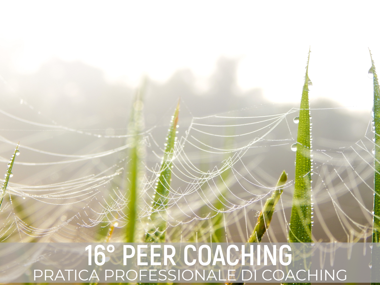 Peer coaching 2021 Fedro